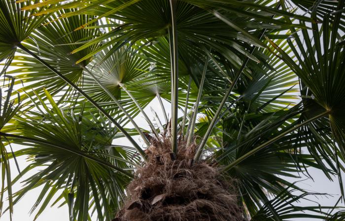 [Translate to Deutsch:] Pure Bali palmboom